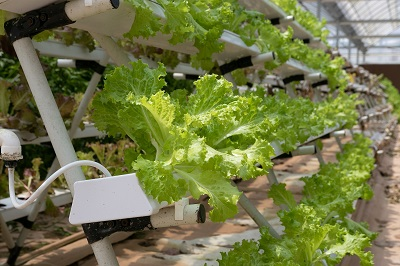 The project focuses on vertical farming